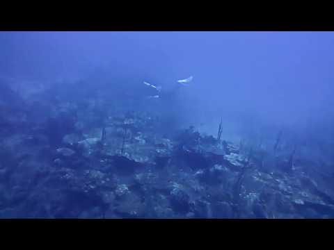 South Brimstone reef, St Kitts. Feeding Lionfish to the Sharks on a 50 M / 165ft technical dive